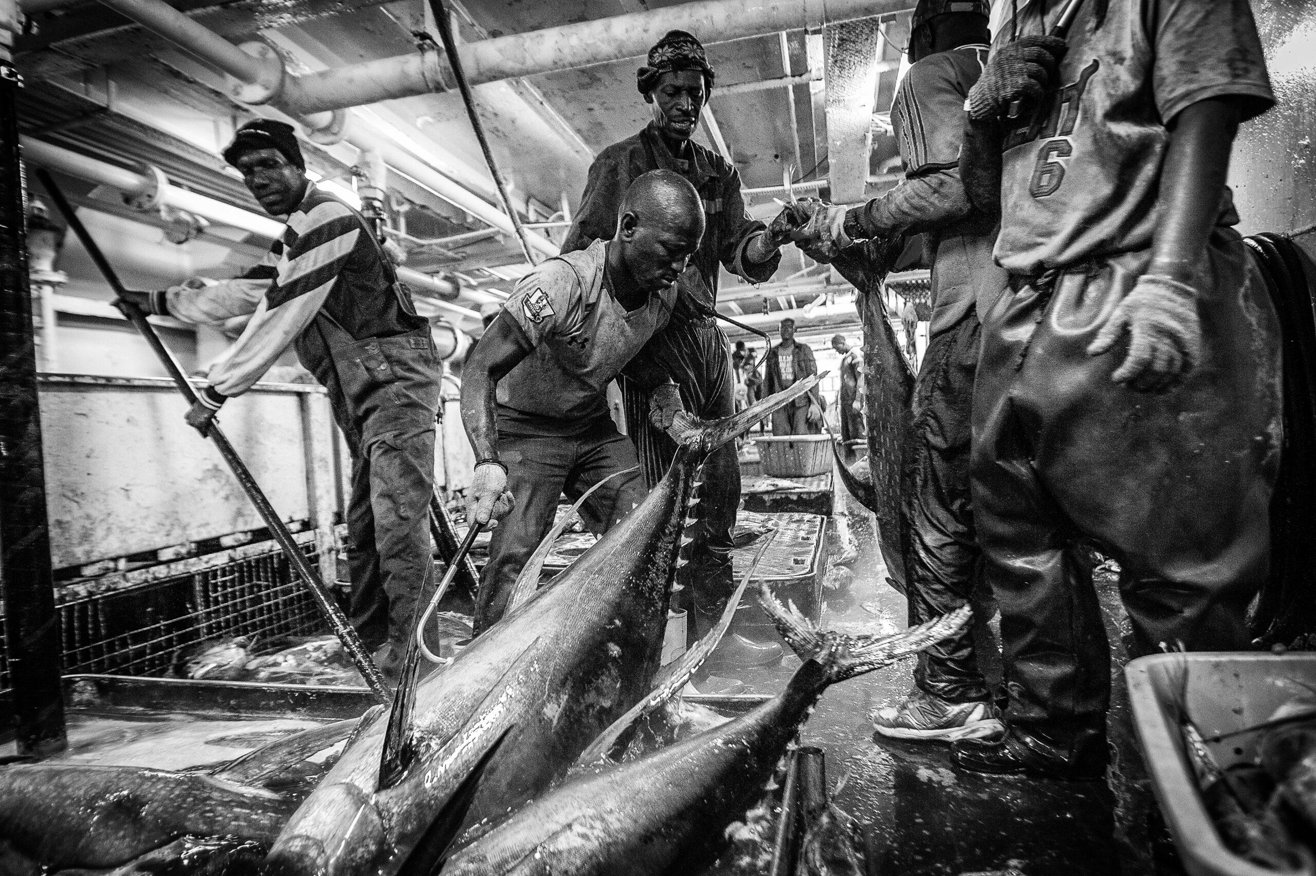 Primer Premio. Categoría: Mejor trabajo en el exterior (Serie). Marineros de nacionalidad senegalesa trabajan en las bodegas de un barco atunero de bandera española que faena en el Océano Atlántico y tiene de base de operaciones el puerto de Dakar en Senegal. España es el segundo productor mundial de conservas de Atún después de Tailandia. Nando Rivero