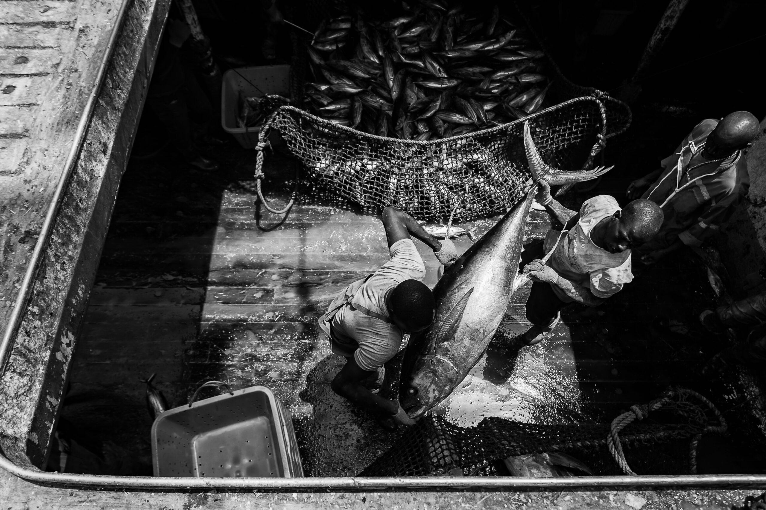 """Primer Premio. Categoría: Mejor trabajo en el exterior (Serie). Marineros senegaleses descargan un ejemplar de atún """"Yellowfin"""" en el puerto de Dakar, Senegal. El Yellowfin se encuentra principalmente en aguas tropicales y es mayoritariamente utilizado para conservas. Nando Rivero"""