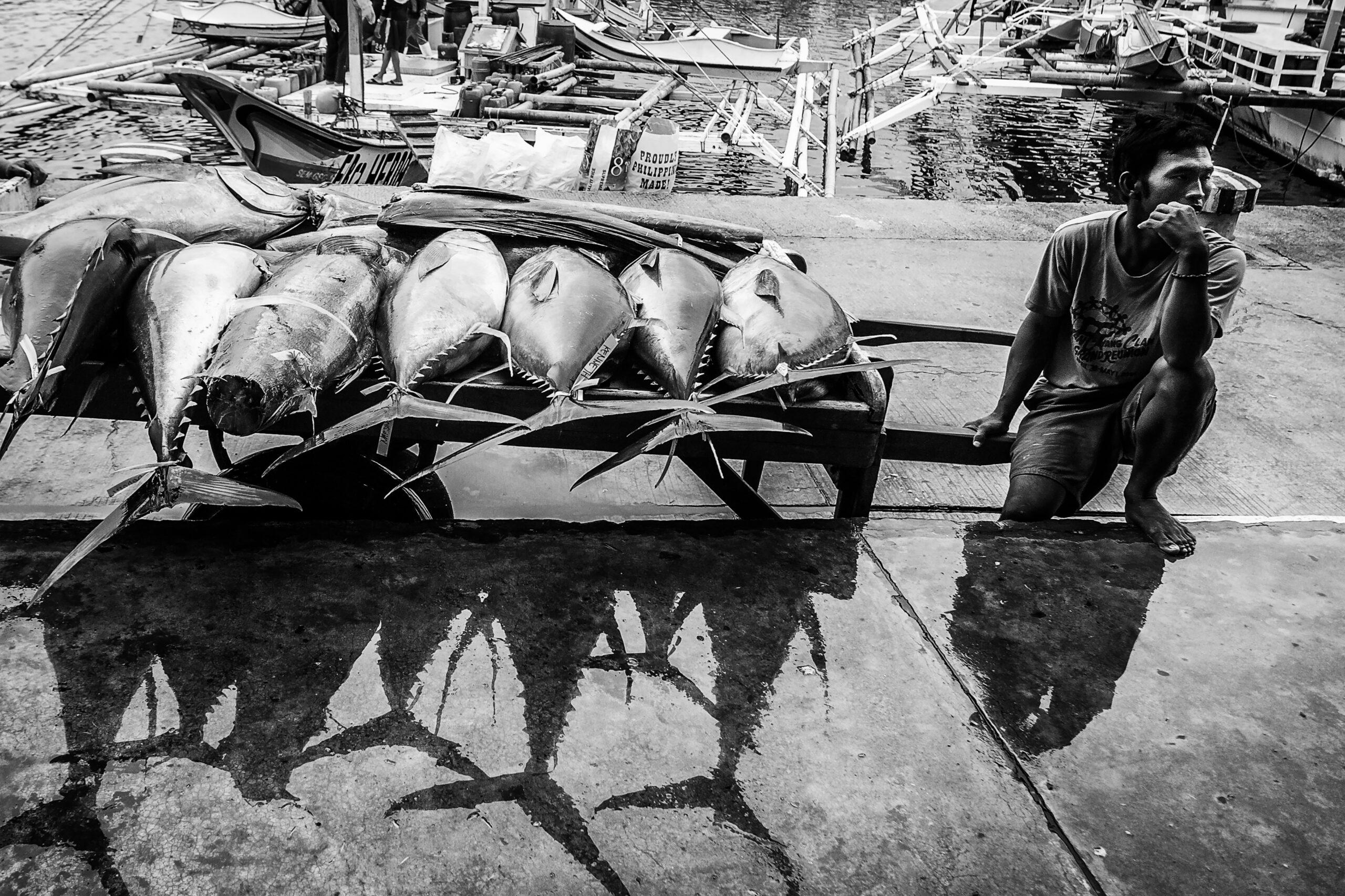 Primer Premio. Categoría: Mejor trabajo en el exterior (Serie). Un pescador espera para pesar los atunes en el puerto de General Santos, Filipinas. La pesca del atún y el cultivo de piña tropical son las principales fuentes de ingresos de los habitantes de de esta localidad, donde ser pescador de atún es un puesto de trabajo muy bien considerado y bien remunerado. Nando Rivero