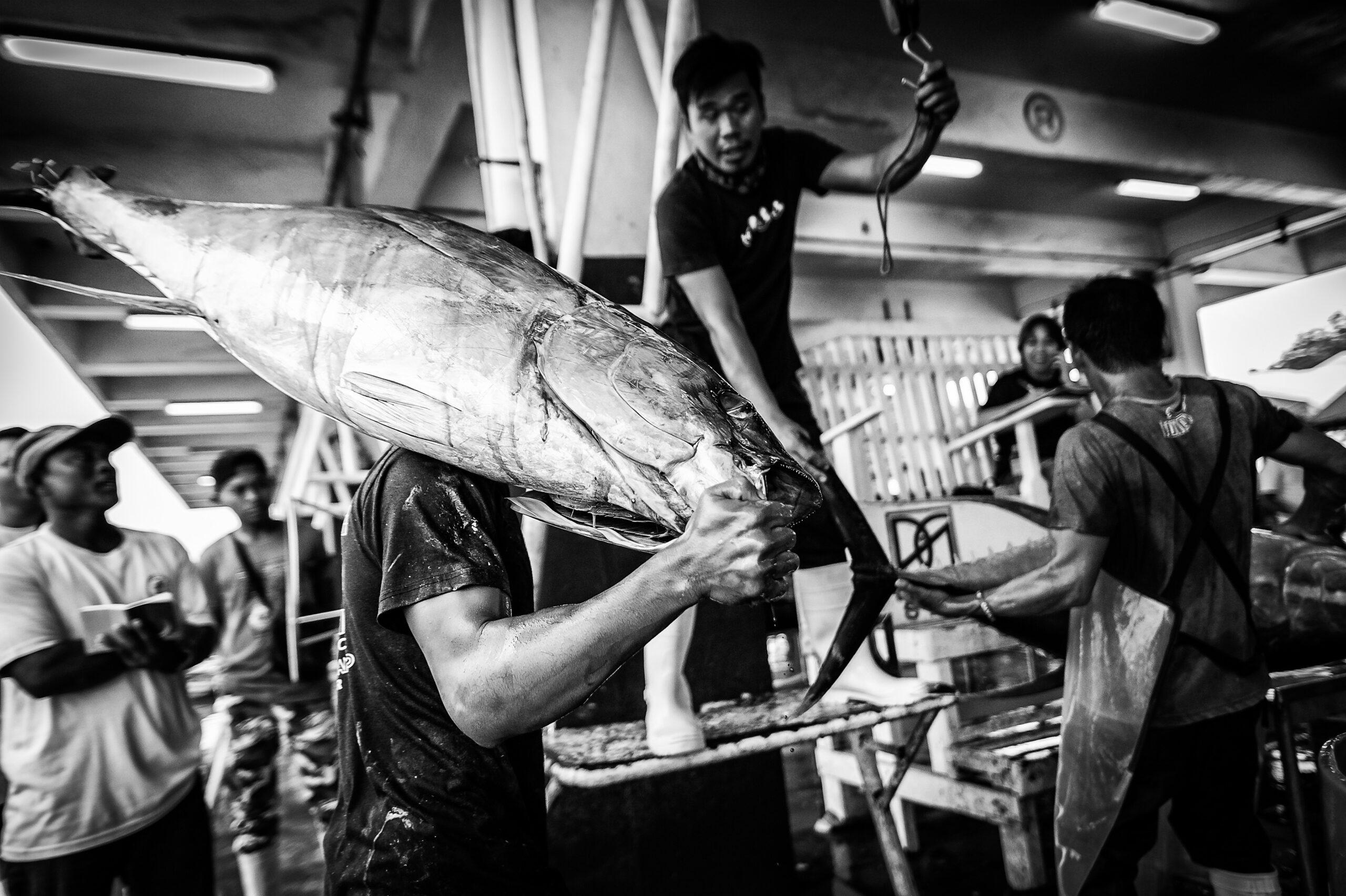 Primer Premio. Categoría: Mejor trabajo en el exterior (Serie). Un trabajador de una compañía atunera procede al pesado de una pieza de yellowfin en el puerto de General Santos, Filipinas. Un ejemplar de yellowfin puede llegar a pesar hasta 170 kilogramos. Nando Rivero