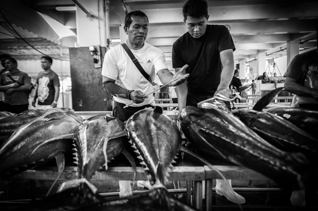 """Primer Premio. Categoría: Mejor trabajo en el exterior (Serie). Con una varilla cilíndrica hueca """"sashibo"""" un catador extrae muestras de carne de cada atún para determinar su calidad en el puerto de General Santos, Filipinas. Todas las empresas compradoras de atún tienen a su representante en los puertos para asegurar que el atún que les envían tiene la calidad que ellos demandan. Nando Rivero"""