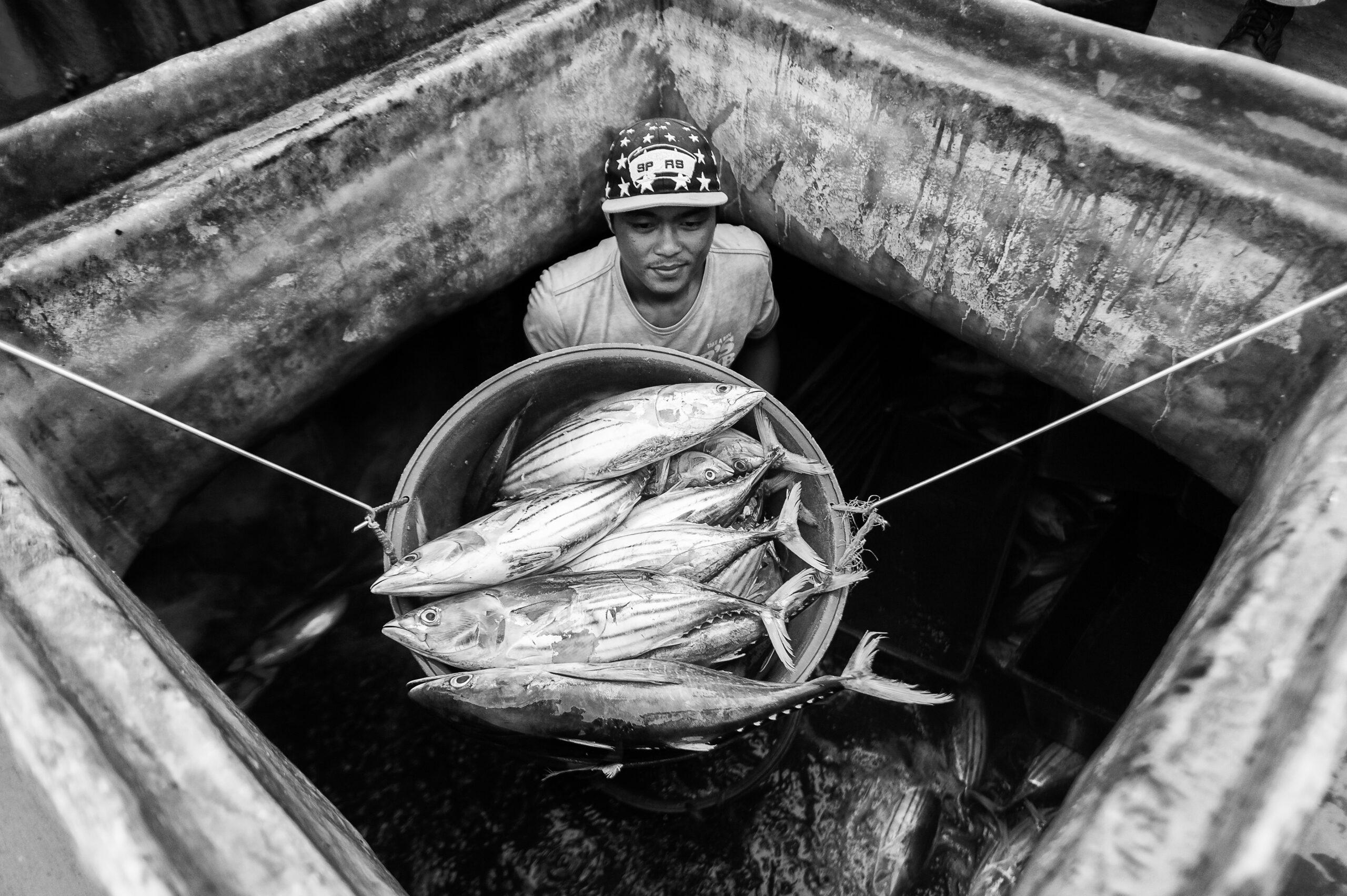 Primer Premio. Categoría: Mejor trabajo en el exterior (Serie). Un pescador descarga atún listado desde la bodega de un barco perteneciente a la flota filipina en General Santos. El atún listado es relativamente pequeño, pudiendo medir un metro como máximo, y es el más abundante y ampliamente pescado de las especies de atún. Nando Rivero